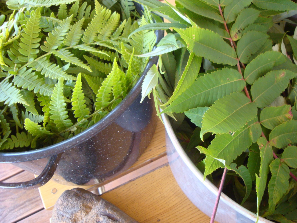 Bracken and sumac leaves for natural dyeing with Donna Kallner.