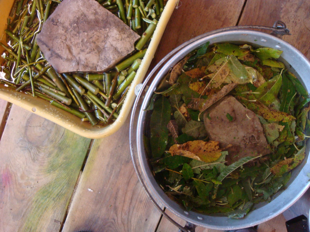 Fresh willow twigs and leaves prepared for dyeing yarn by Donna Kallner.
