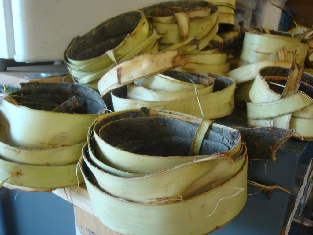 Willow bark harvested for natural dyeing by Donna Kallner.