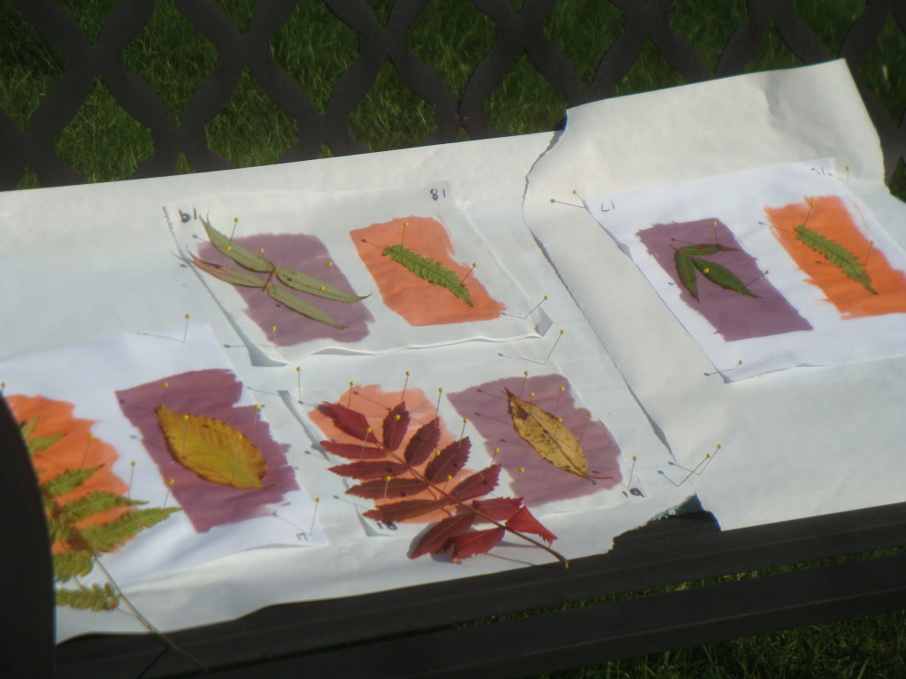 Inkodye and SolarFast samples.