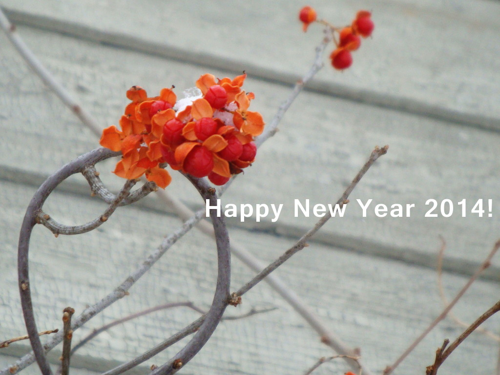 Happy New Year 2014 from Donna Kallner.