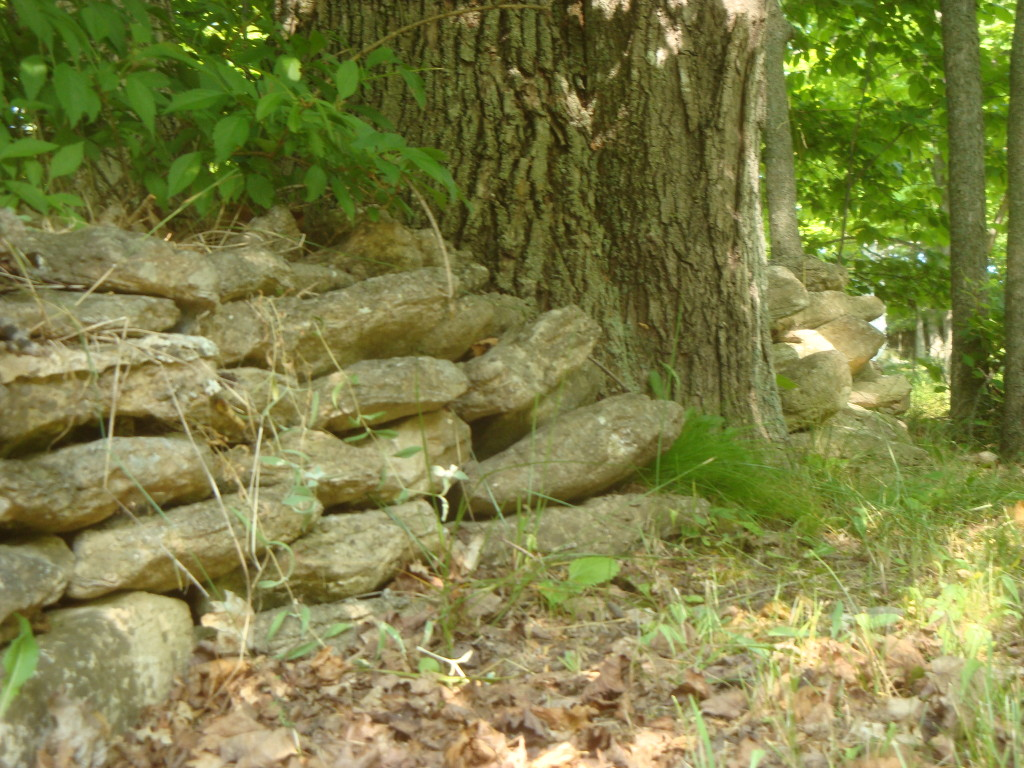Stone fence on Washington Island.