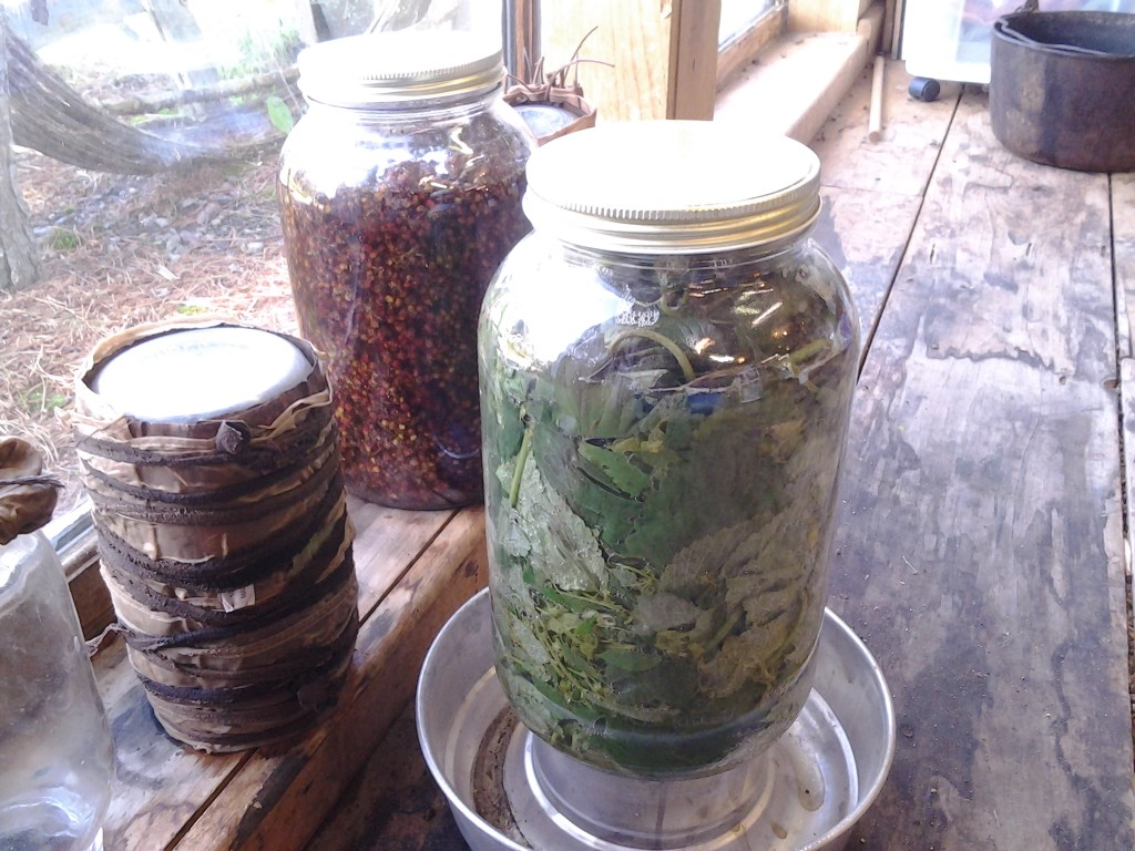 Natural dye fermentation experiments with hops and staghorn sumac drupes.