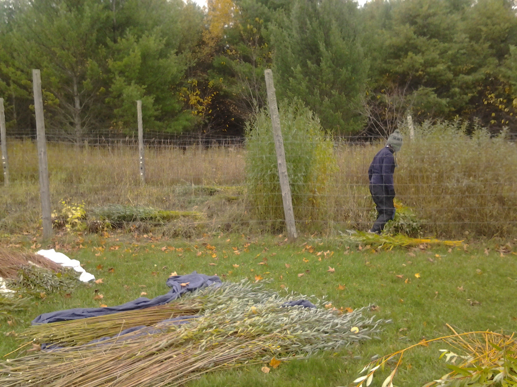 Cutting the willow bed at Sievers.