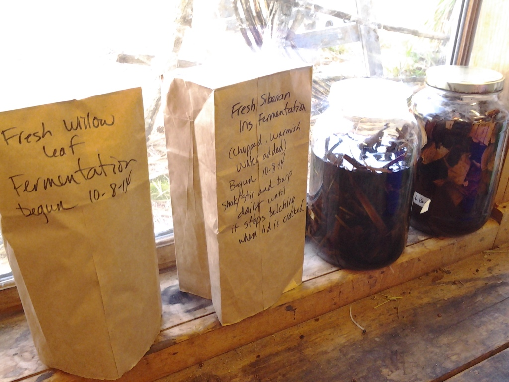 Natural dye fermentation extraction experiments.