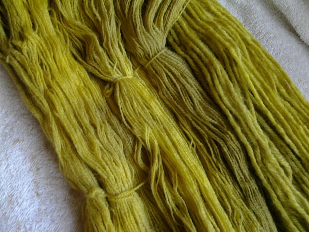 Rhubarb leaf natural dye on wool.