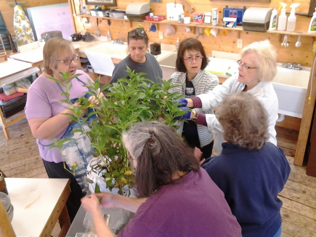 Sievers students picking fresh Japanese indigo leaves in natural dye class.