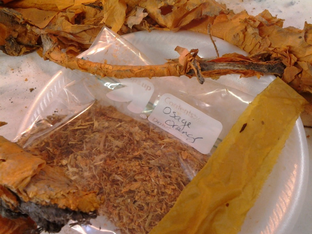 Osage orange root bark ground for natural dye.