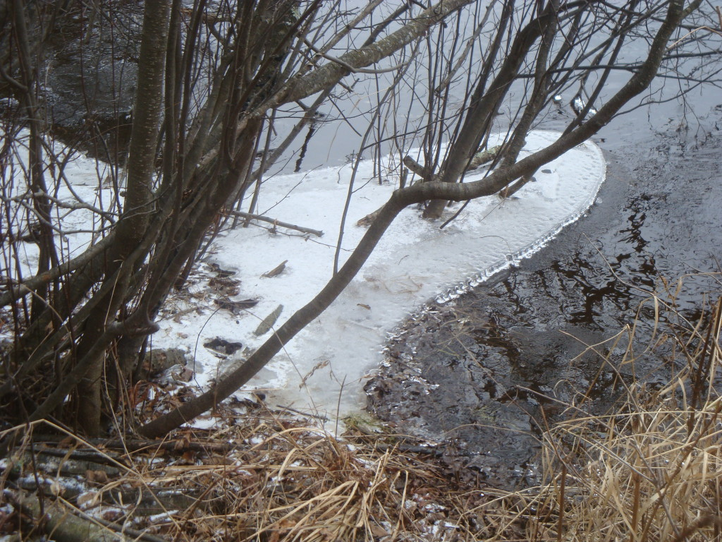 Ice along the banks of the Wolf River in December 2015.