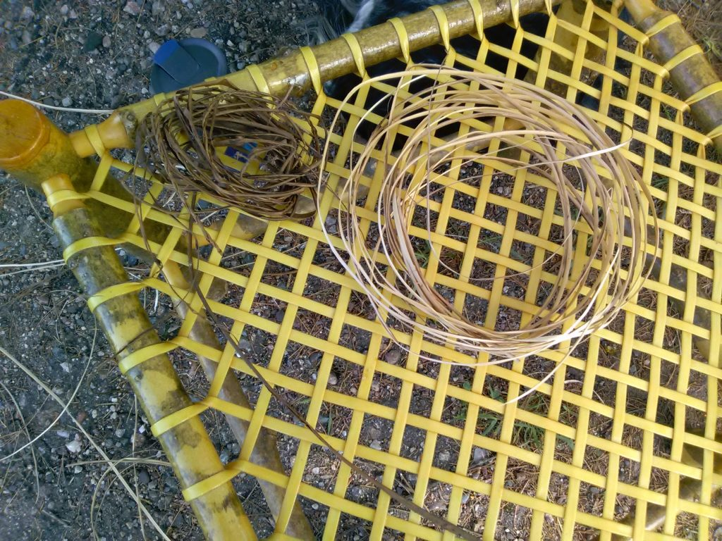 Boiled split willow with bark removed and backs taken off for skeining and cordage.