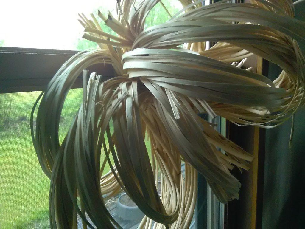 Willow bundles with backs taken off drying to tighten grain.