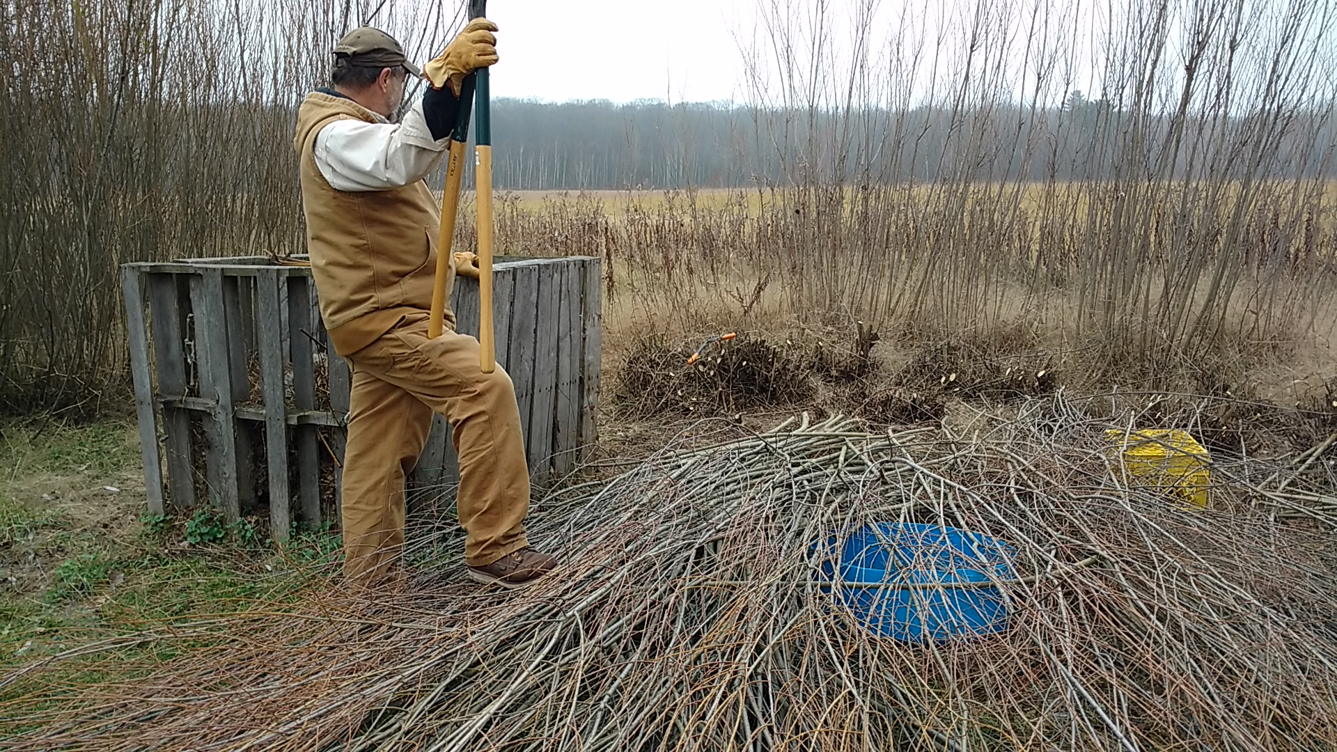 Cutting the overgrown willow from the snow fence.