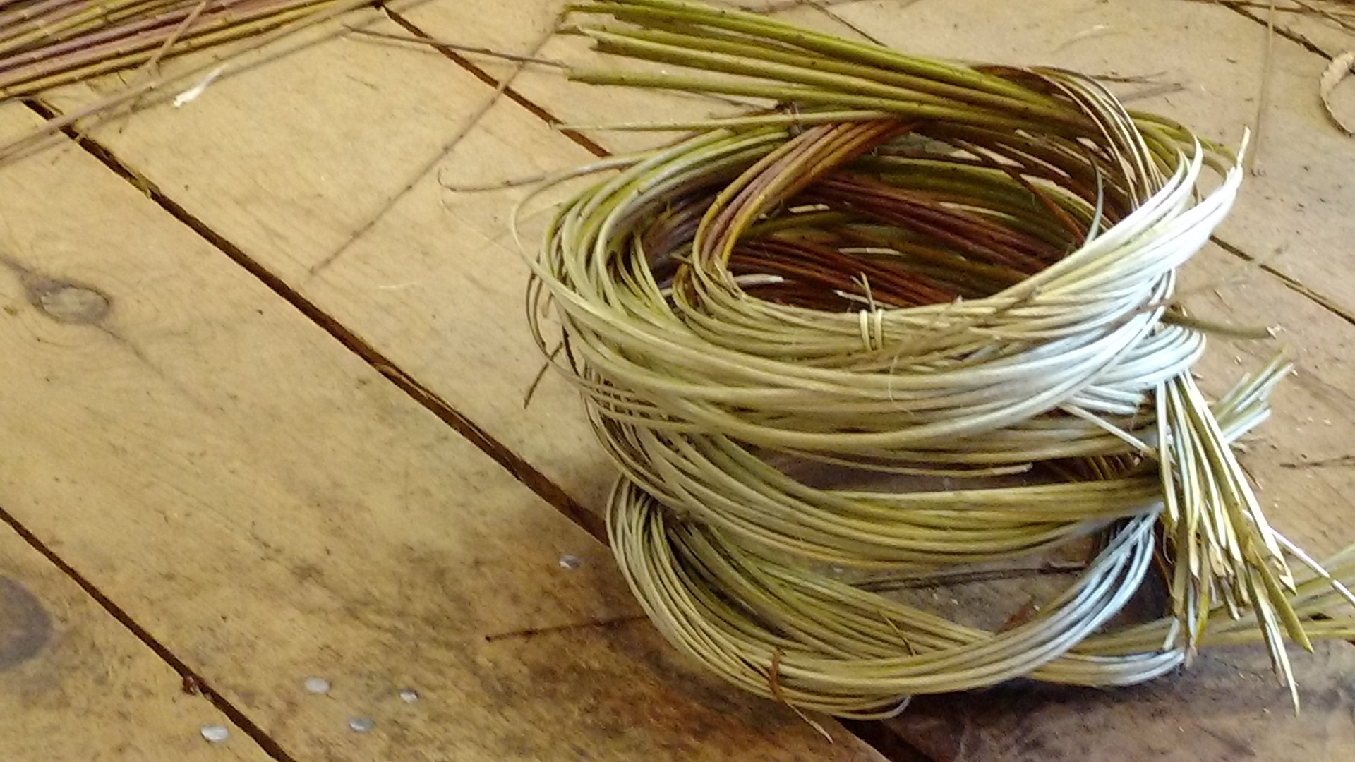 Freshly cut willow cleaved with the bark on and coiled for boiling.